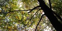 Vanskelige træer_thumb